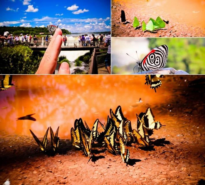 Butterflies in Puerto Iguazu | Argentina