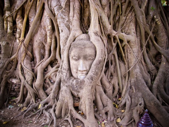 Entwined Buddha head in tree