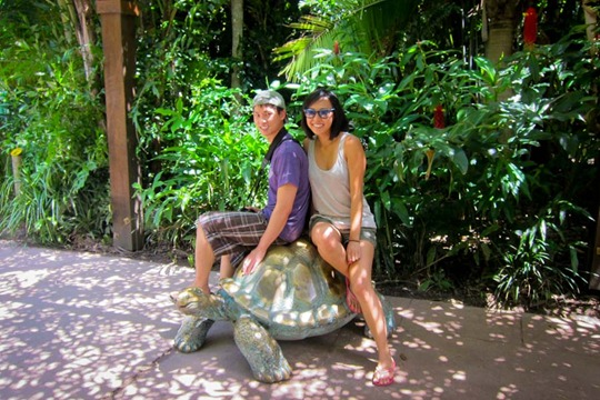 gq-turtle