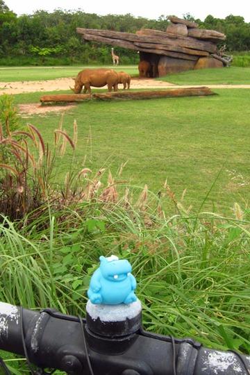 harold-rhino