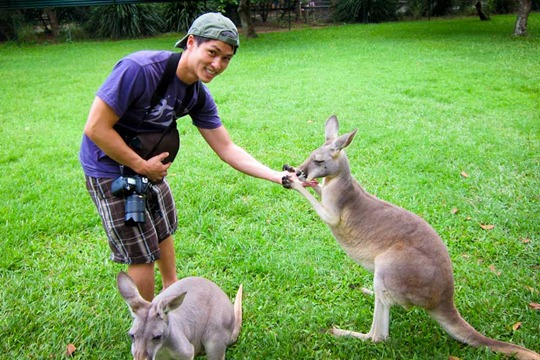kangaroo-feeding