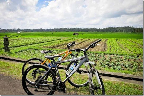 Bali Bikes