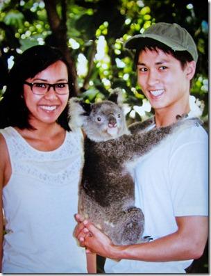 koala-lone-pine