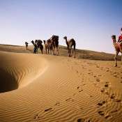 camel-safari-thar-desert-far