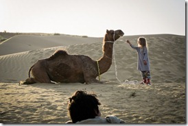 camel-safari-thar-desert-feed