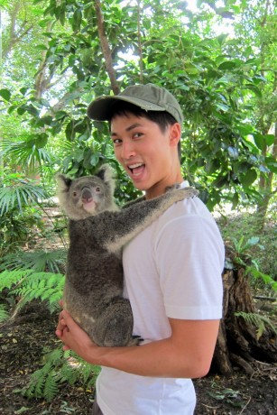 lone-pine-koala