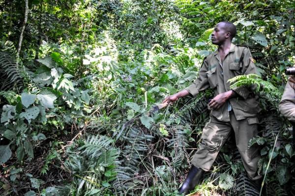 uganda gorilla tracker machete