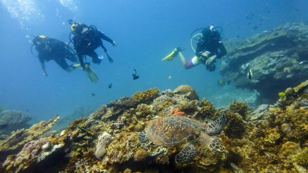 Turtle Scuba Diving