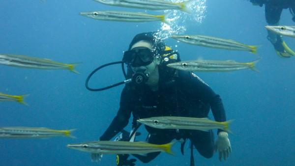 Barracuda Fish Scuba Diving