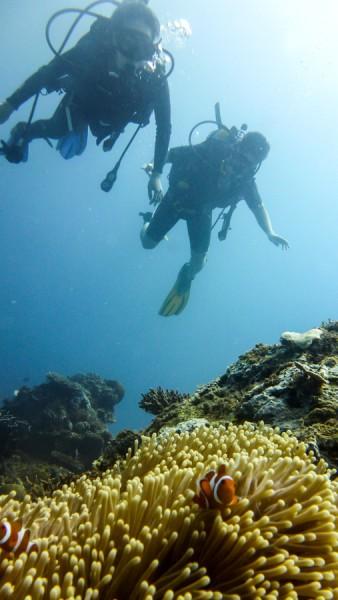 Nemo Clownfish El Nido Philippines